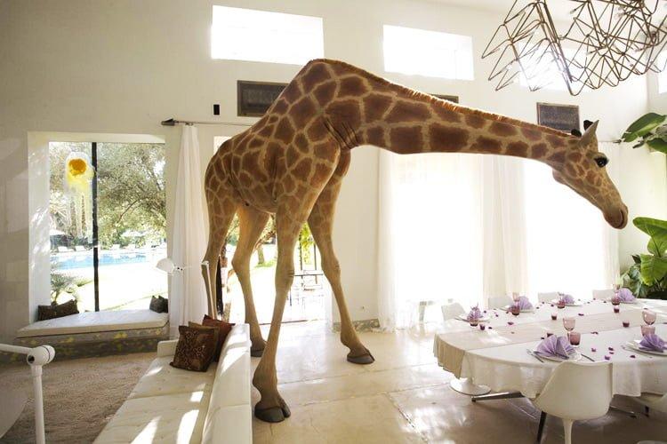 FOURTOU_giraffe_01