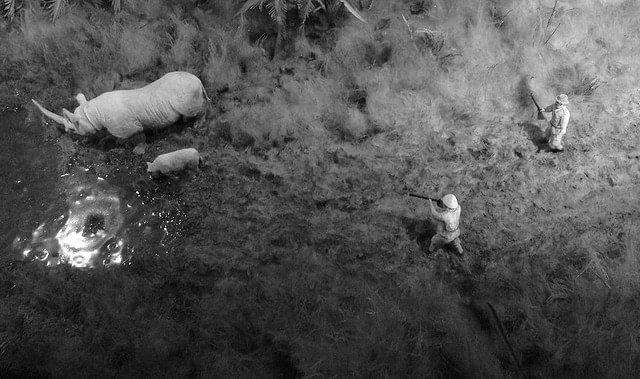 Rhino braconnage - Romain