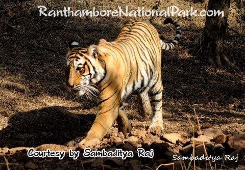 ranthambore_79
